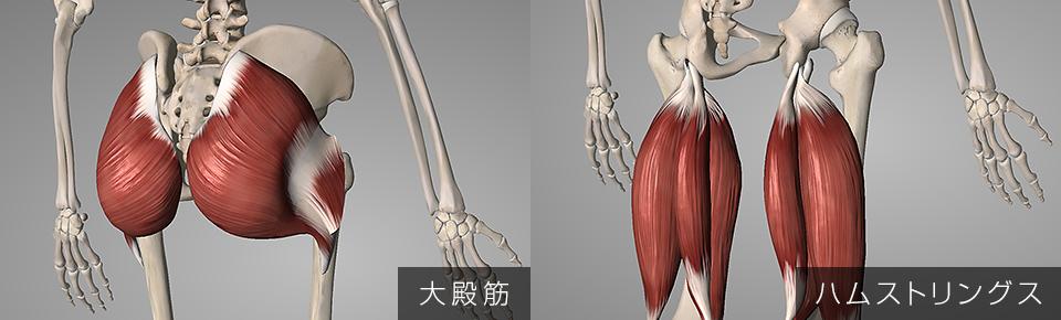 骨盤を後傾させる代表的な筋肉