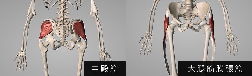 中殿筋・大腿筋膜腸筋