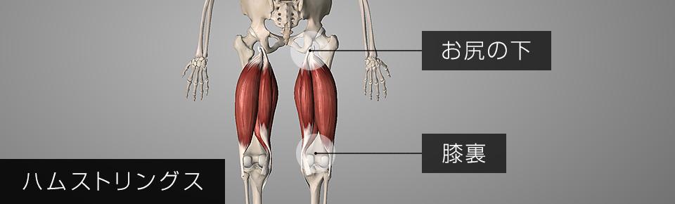 ハムストリグスお尻の下の部分から太ももの裏側を通り膝裏にかけてついている