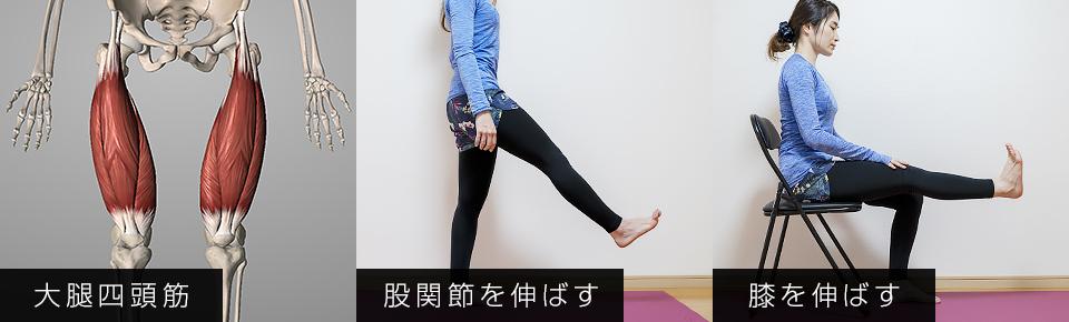大腿四頭筋は股関節を曲げる・膝を伸ばす働きがある