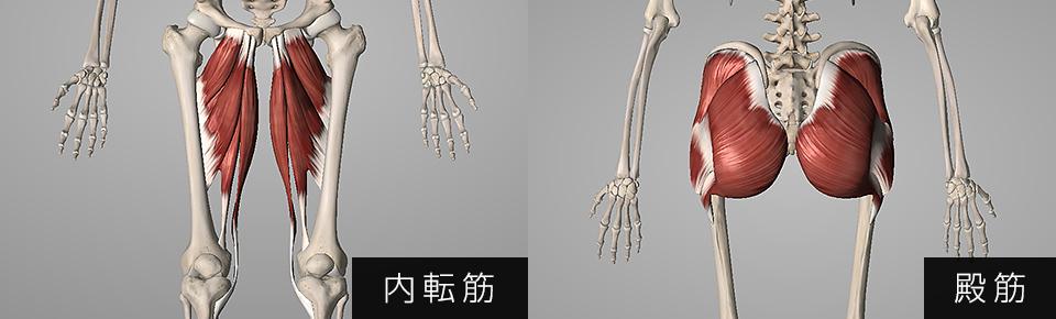 大腿筋膜腸筋は内転や臀筋が硬くなり衰えると硬くなりやすくなる