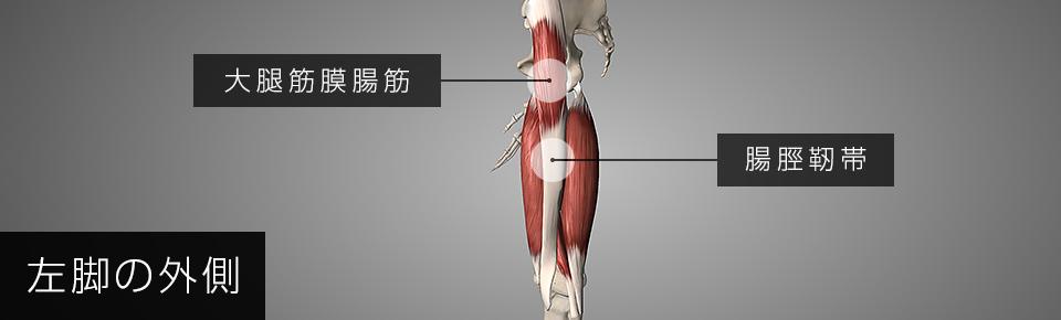 大腿筋膜腸筋は途中で腸脛靭帯に変わり膝の外側についている