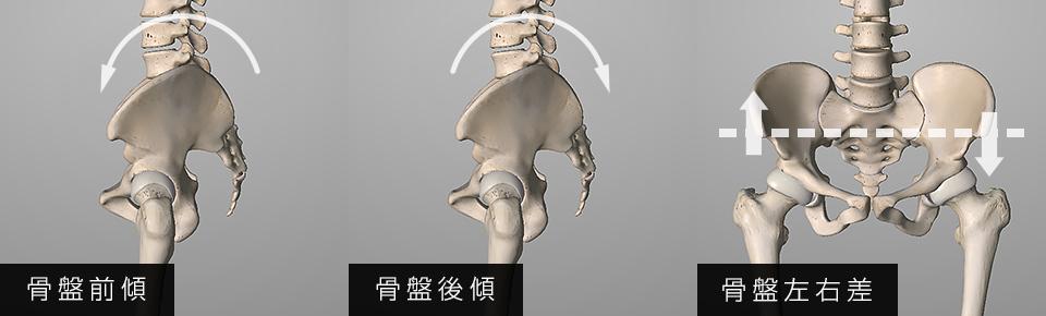 骨盤の「前傾・後傾・左右差」