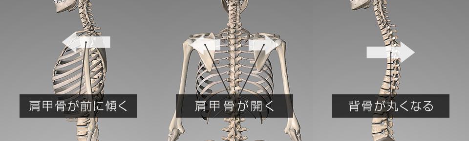 大胸筋・小胸筋が硬くなると肩甲骨が前に傾き外側に開きやすくなる