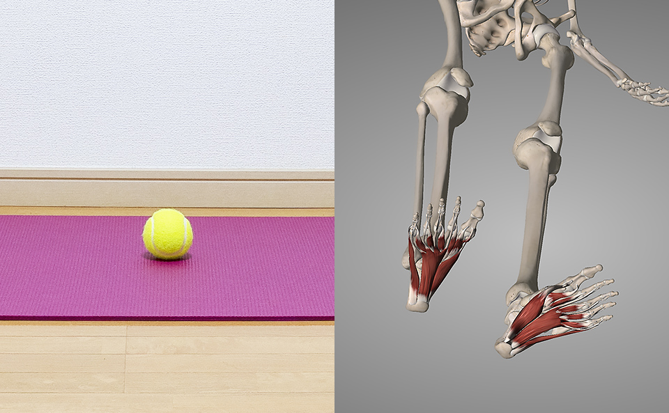 テニスボールで足裏をほぐして得られる効果