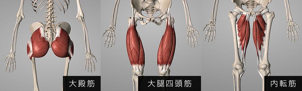 大殿筋・大腿四頭筋・内転筋