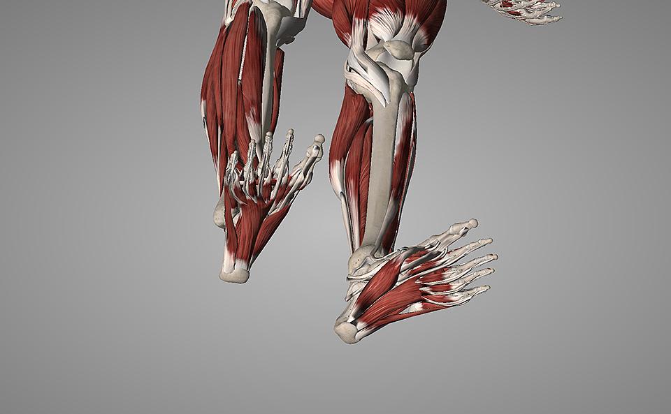 フロッグハンドの効果・足の指や足裏を鍛える理由