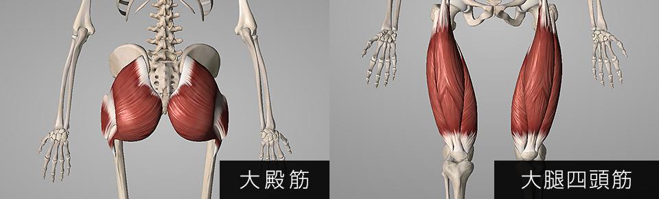 大殿筋・大腿四頭筋
