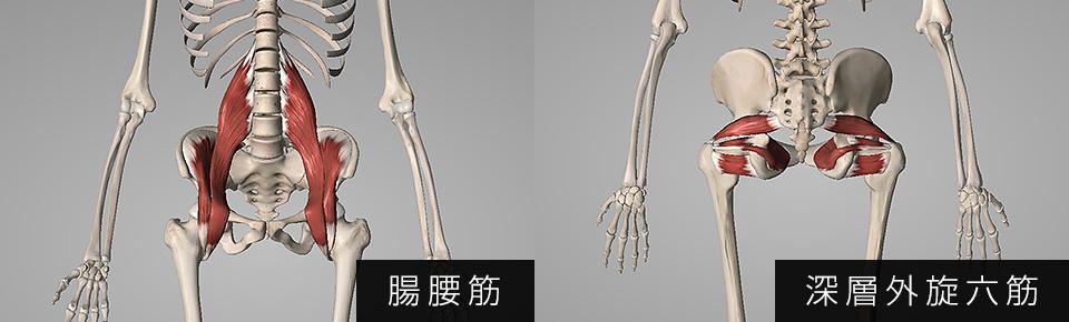 腸腰筋・深層外旋六筋