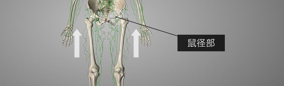 下半身のリンパは足から股関節(鼠径部 = そけいぶ)に向かって流れている