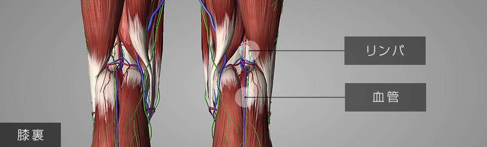 脚のむくみ・冷え・疲れの解消・予防