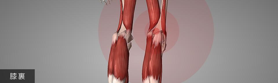 膝裏痛の改善・予防