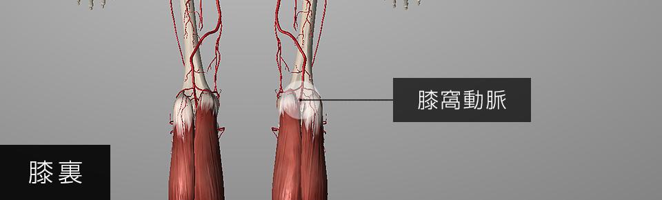 ふくらはぎの筋肉が硬くなると膝窩動脈が圧迫される
