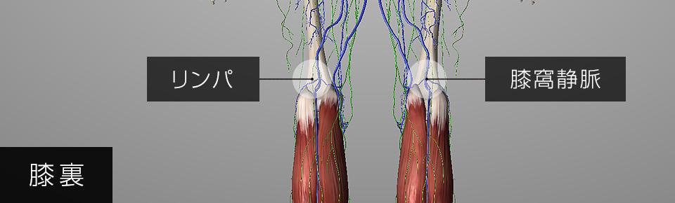 ふくらはぎの筋肉が硬くなると膝窩静脈・リンパが圧迫される