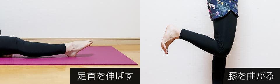 ふくらはぎは足首を伸ばす・膝を曲げる働きを持っている