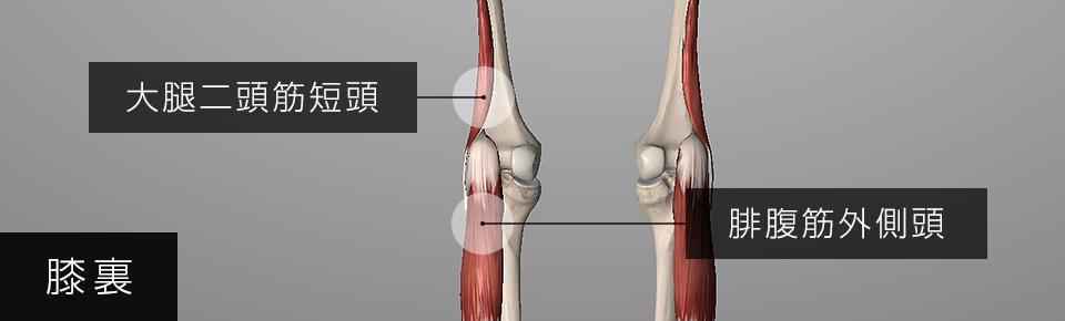 膝裏の外側の痛み = 腓腹筋外側頭と大腿二頭筋短頭が硬くなる