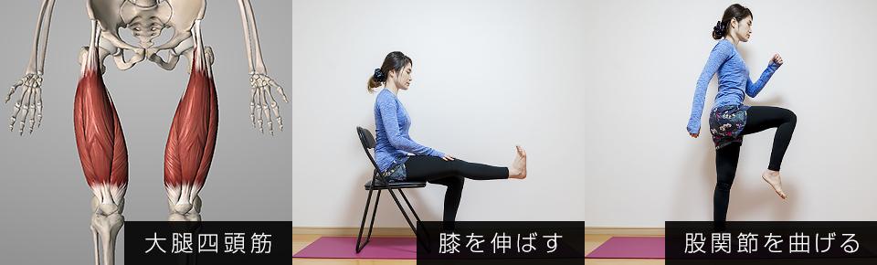 大腿四頭筋の役割は「膝を伸ばす・股関節を曲げる」