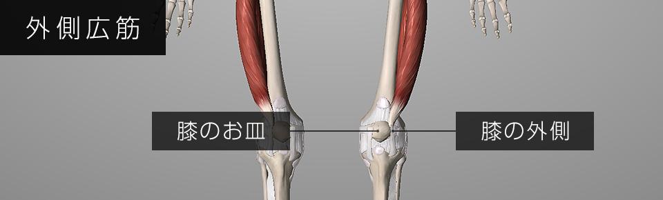 外側広筋が硬くなると外側膝蓋支帯に影響を与え膝蓋骨の動きが悪くなる