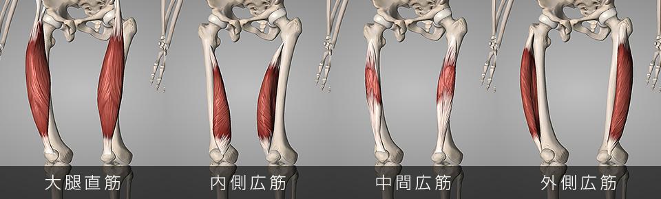 前ももについている4つの筋肉