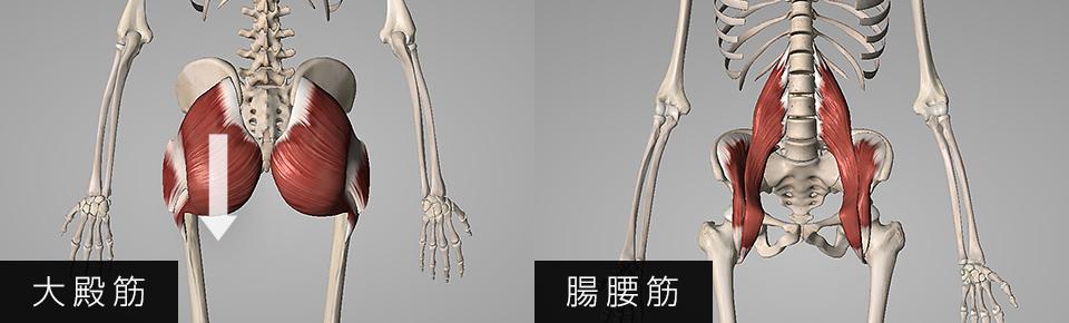 お尻の筋肉が硬くなるとお尻が垂れ下がる・股関節の前側の筋肉が弱くなると骨盤が後傾しやすくなる