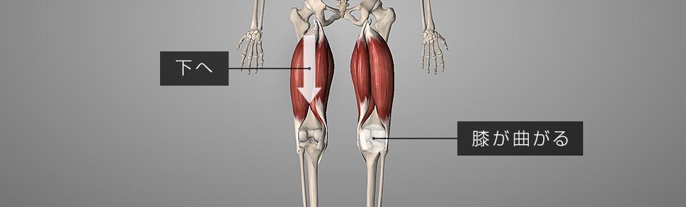 もも裏の筋肉が硬くなると脚が短く見える