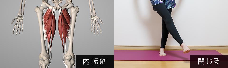 内転筋は股関節を内側に閉じる働きを持っている