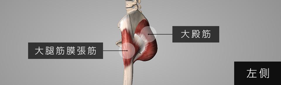 大腿筋膜張筋と大殿筋はつながっている