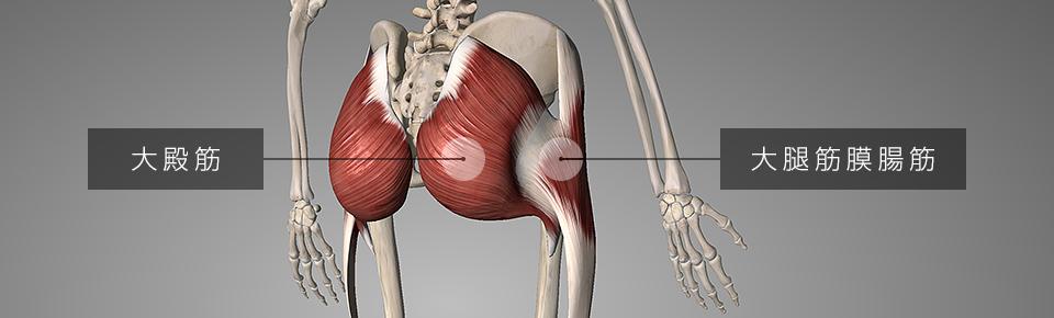 大腿筋膜腸筋・大殿筋