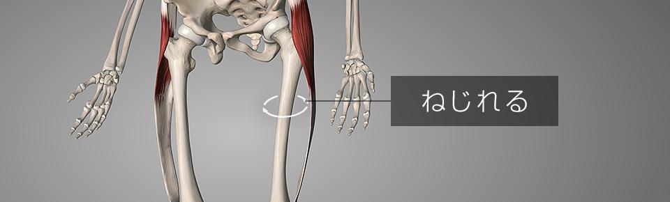 大腿筋膜腸筋が硬くなるとO脚の原因んいなる