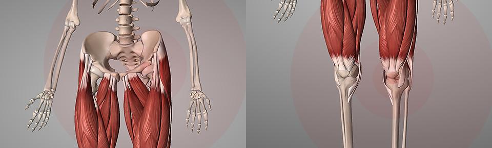 股関節痛・膝痛・脚の疲れやすさの改善予防