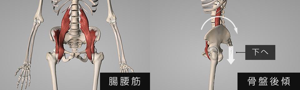 腸腰筋が弱くなると骨盤が後傾しやすくなる