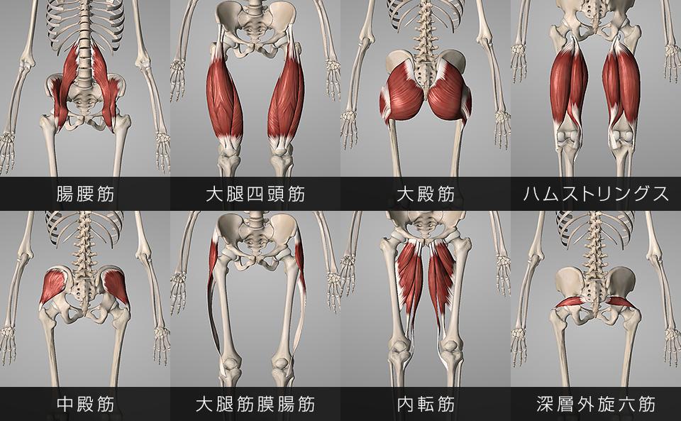 股関節の動きに関わっている筋肉