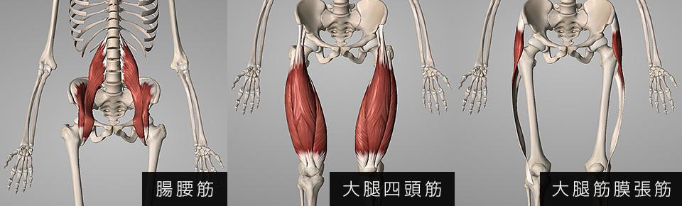 腸腰筋・腸腰筋・大腿筋膜張筋