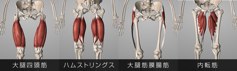 大腿四頭筋・ハムストリングス・内転筋・大腿筋膜張筋