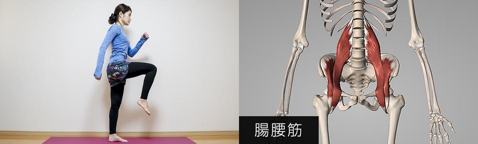 太ももを持ち上げるために働く筋肉「腸腰筋」
