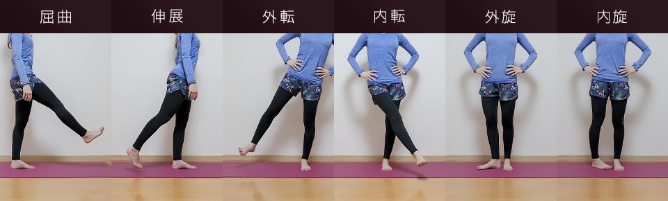 股関節の主な作用