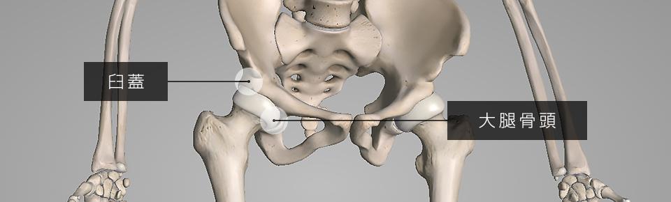股関節の作用(動き)について