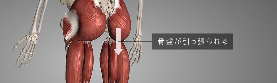 大殿筋とハムストリングスが硬くなり骨盤が後傾する