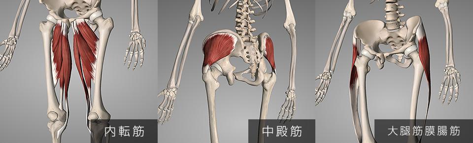 大腿筋膜腸筋