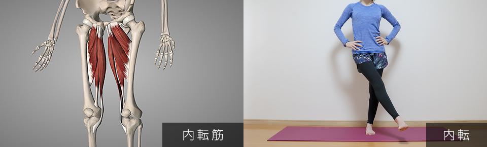 股関節のストレッチ 内転筋