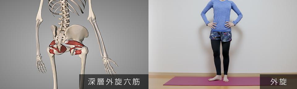 股関節のストレッチ 深層外旋六筋