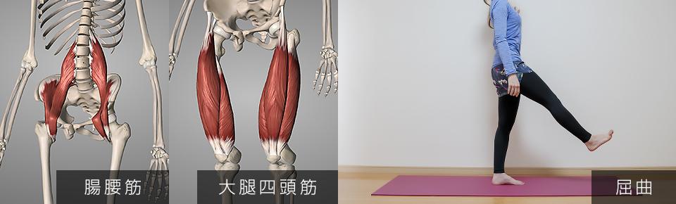 股関節の屈曲・腸腰筋・大腿四頭筋