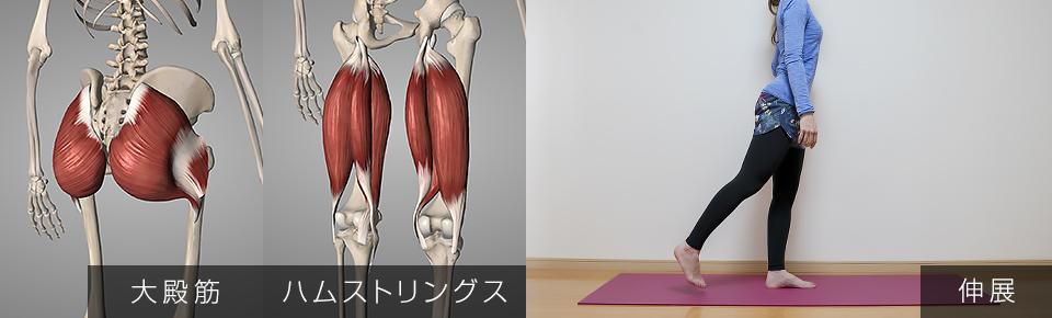 股関節の伸展・大殿筋・ハムストリングス