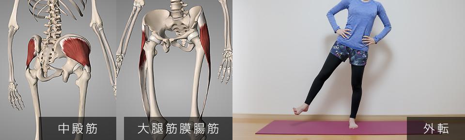 股関節の外転・中臀筋・大腿筋膜腸筋