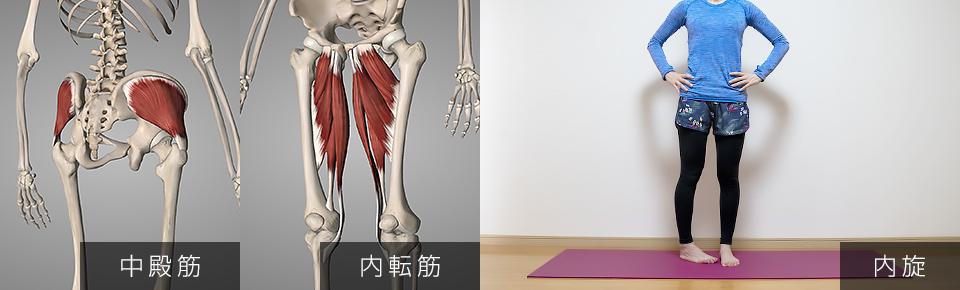 股関節の内旋・中臀筋・内転筋