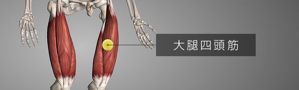 テニスボールでマッサージ2 前ももの筋肉「大腿四頭筋」