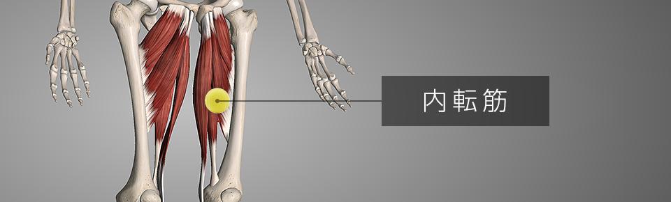 テニスボールでマッサージ7 内ももの筋肉「内転筋」
