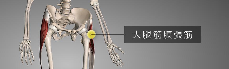テニスボールでマッサージ6 外ももの筋肉「大腿筋膜腸筋」