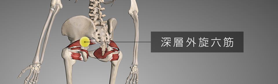 テニスボールでマッサージ8 お尻の奥の筋肉「深層外旋六筋」