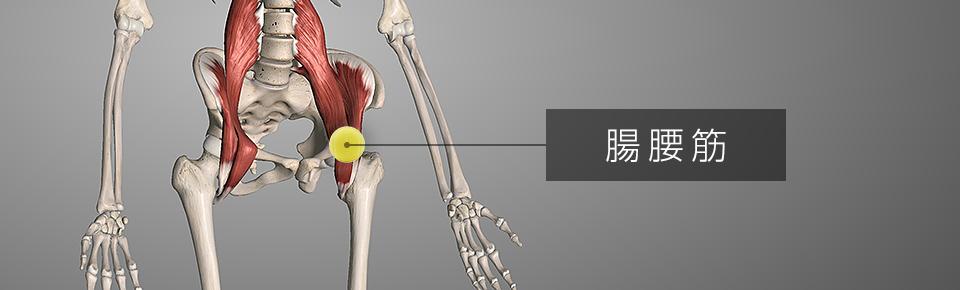 テニスボールでマッサージ1 脚のつけ根の筋肉「腸腰筋」